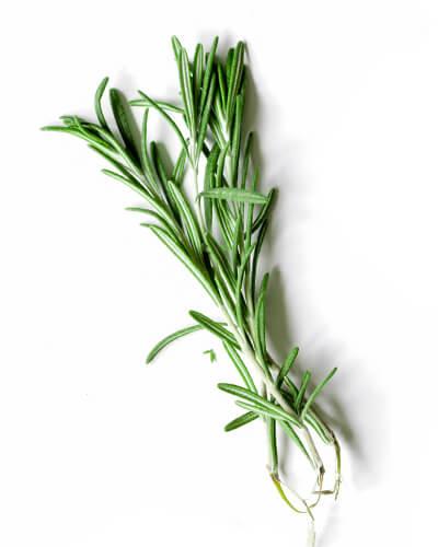 Organic Rosmarinus Officinalis